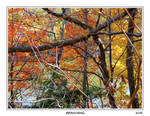 Branching by amelo14
