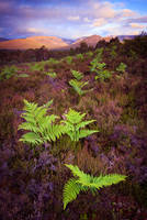 Rothiemurchus Summer by Greg-McKinnon