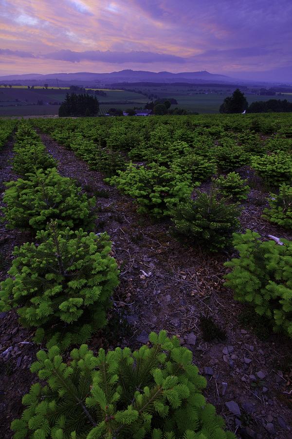 Sidlaws from Backmuir Wood by Greg-McKinnon
