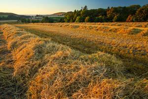 Harvest Sunset by Greg-McKinnon