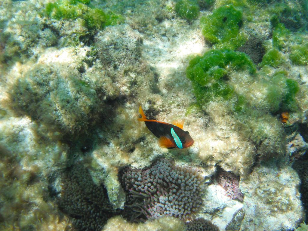 FishCoral at Yejele by natosaurus