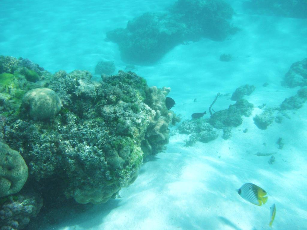CoralFish at Yejele by natosaurus