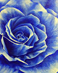 Blue Rose of Mystery