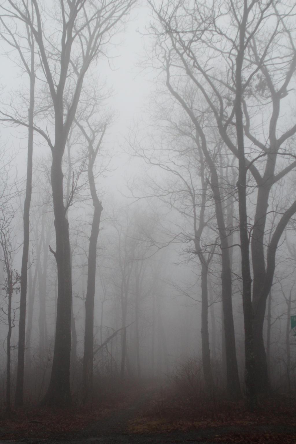 Foggy 7 by TwilitesMuse