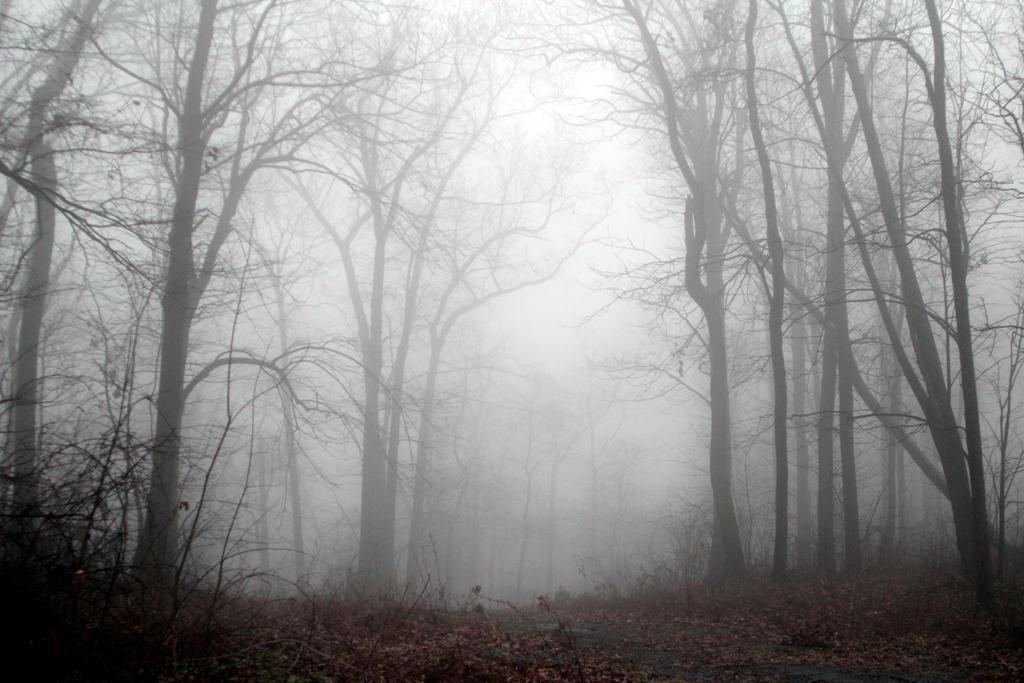Foggy 4