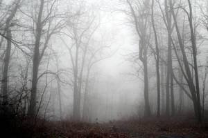 Foggy 4 by TwilitesMuse