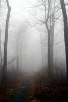 Foggy 9 by TwilitesMuse