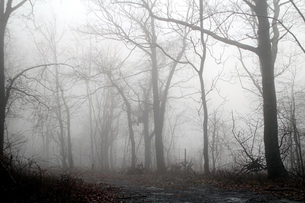 Foggy 3 by TwilitesMuse
