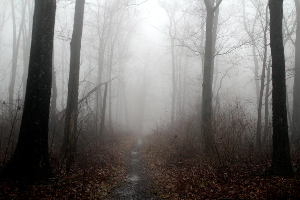 Foggy 5