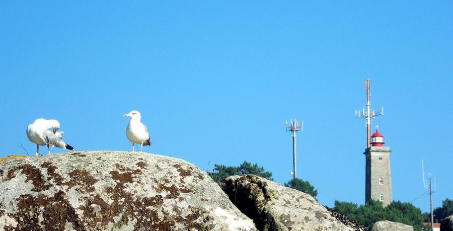gaivotas 01 - seagulls 01 by carlbert