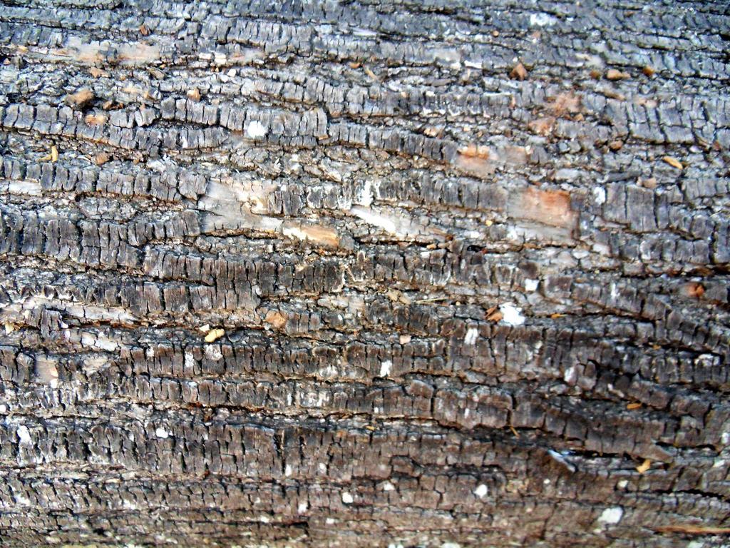 bark texture 02 by carlbert