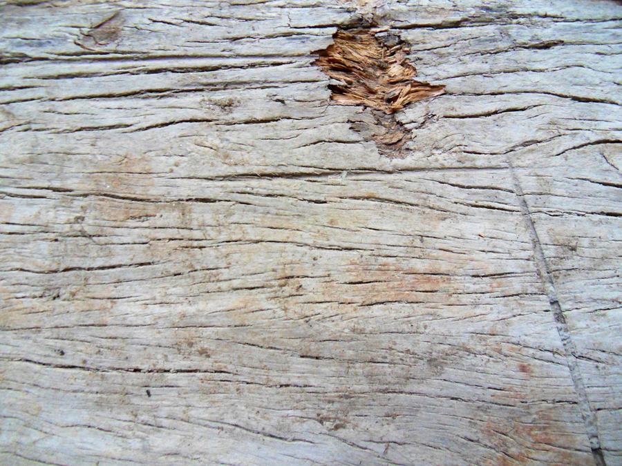 wood texture 05 by carlbert