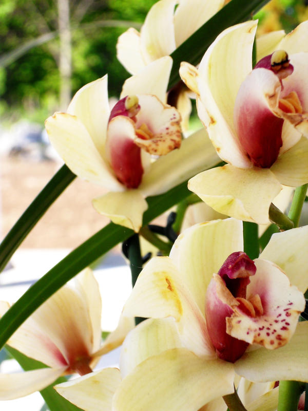 flower 02 by carlbert