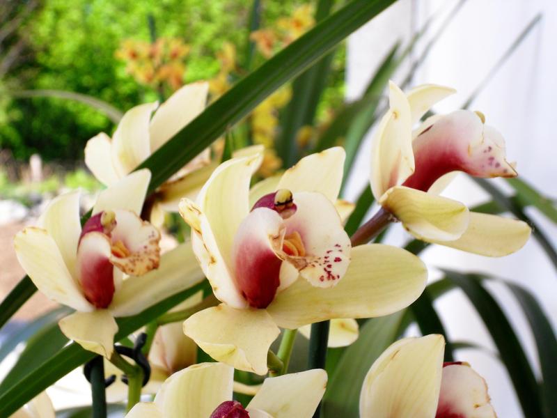 flower 03 by carlbert