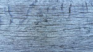 wood texture 14