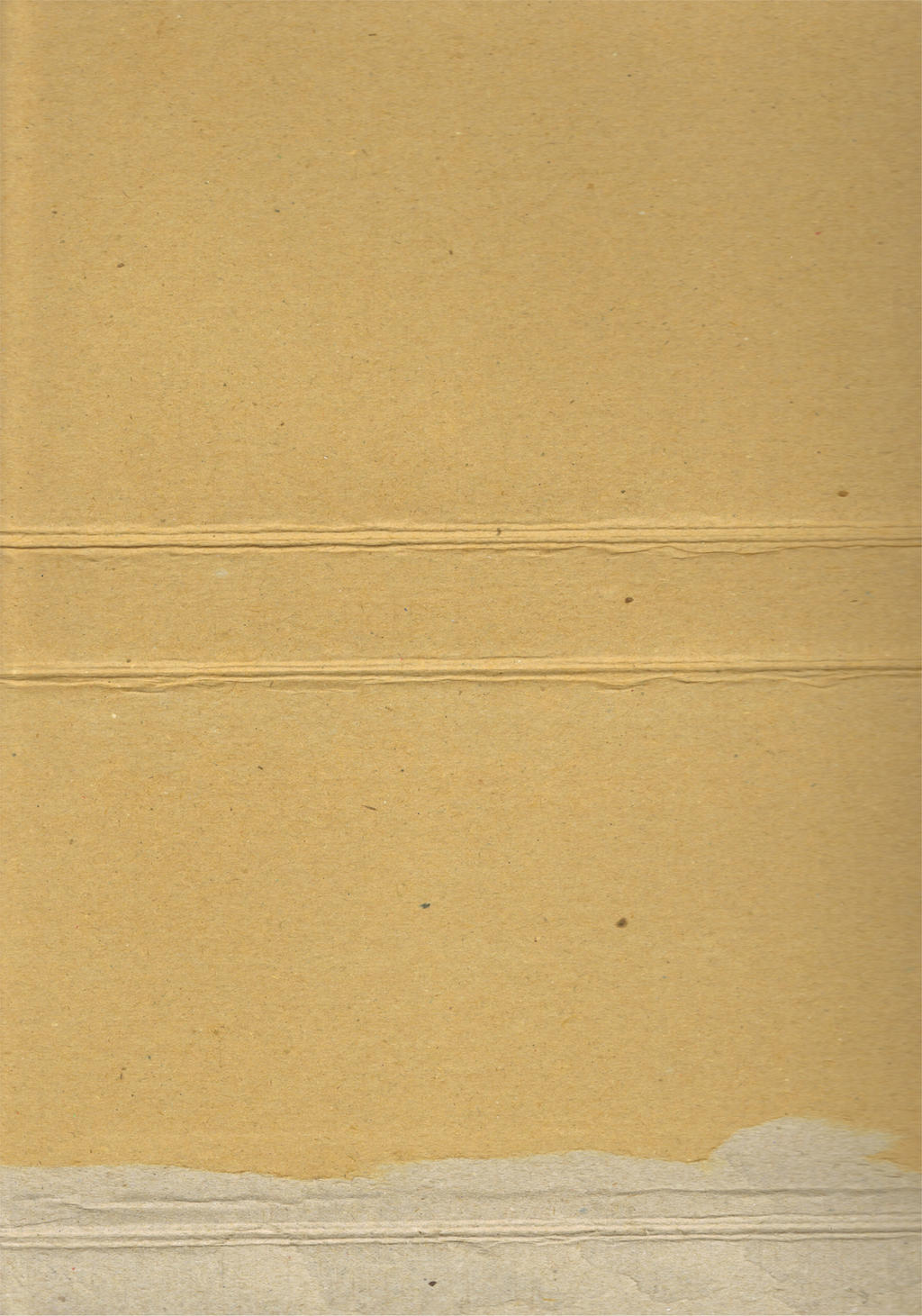 cardboard 02