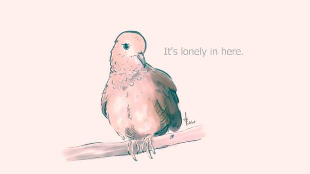 Sad dove