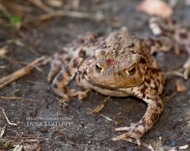 TOADFACE by ERB20