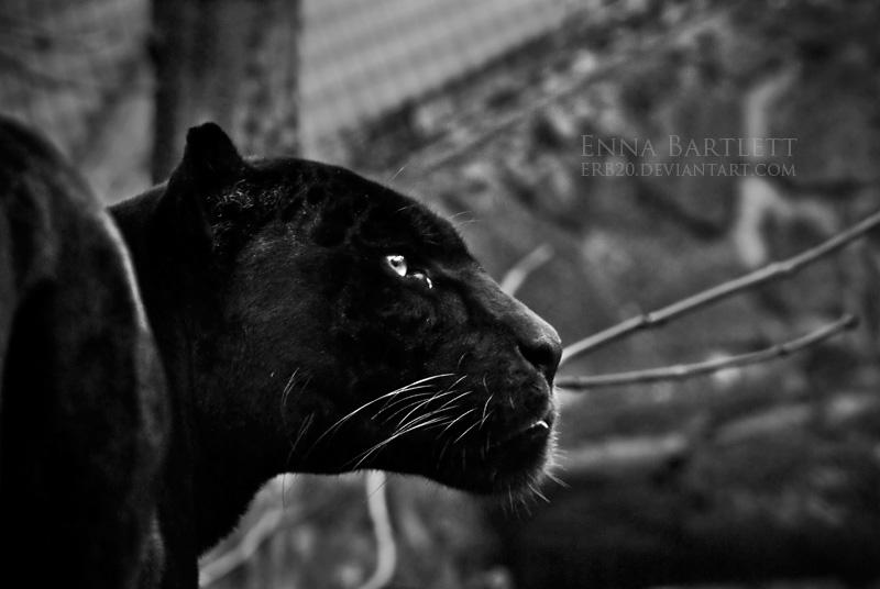Mowgli by ERB20