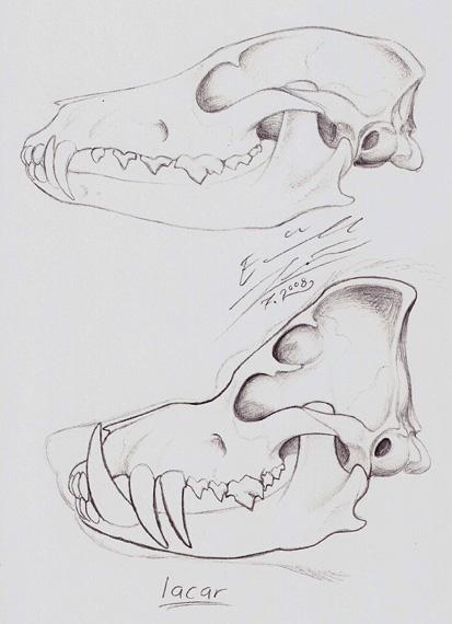 Pig Skull's skull by Paperiapina