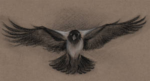 Charcoal crow