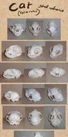 Cat skull reference