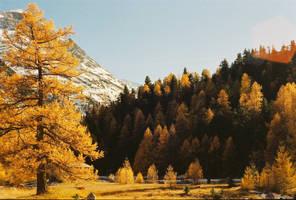 Autumn by Vividlens