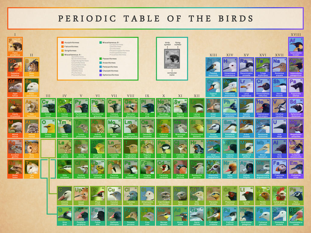 Periodic table of the birds by grosdino on deviantart periodic table of the birds by grosdino urtaz Gallery