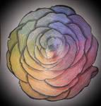 Rose color wheel