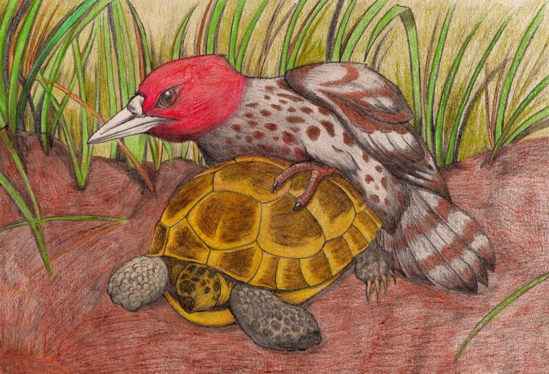 Tortoise woodpecker