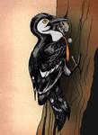 Gospodar woodpecker