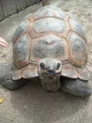 turtle by Darkened-crow