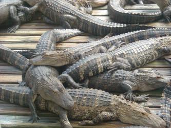 Barrel of gators? by Darkened-crow
