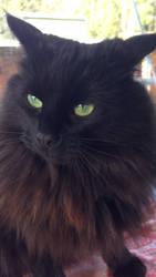 My kitty by Darkened-crow