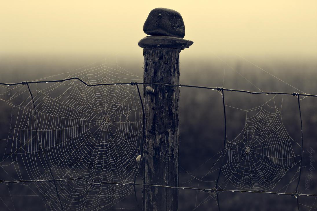 Webs by NickBaker1689