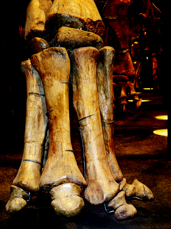 Dinosaur foot toe by nickdesignz