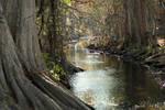 Cibolo River