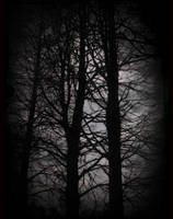 Feeble Screams From Forests... by TacereaMortuara