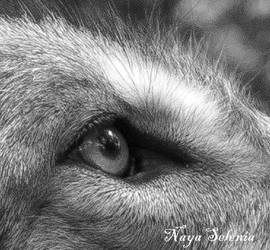 The Eye of the Wolf