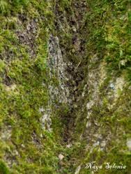Tree Skin I by NayaSelenia