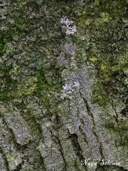 Tree Skin II