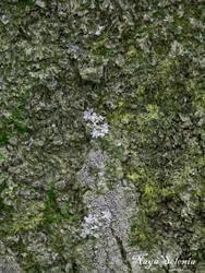 Tree Skin III by NayaSelenia
