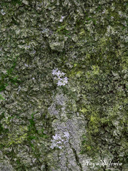 Tree Skin III