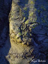 Tree Skin IV by NayaSelenia