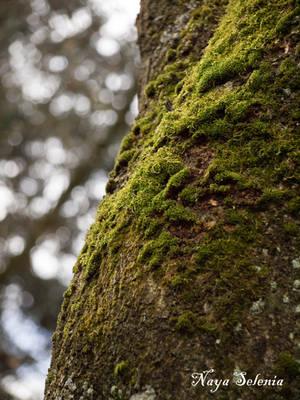 Tree Skin V by NayaSelenia