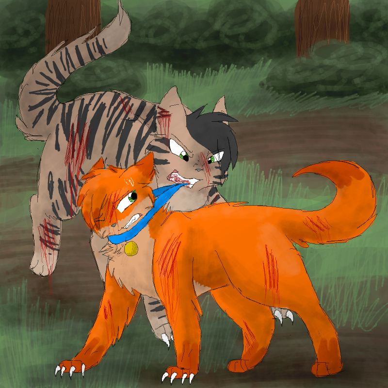 Warriors Cats Into The Wild Movie: Longtail VS Rusty By CascadingSerenity On DeviantArt
