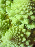 Romanesque Broccoli by chasmosaur