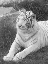 .: White Majesty :.