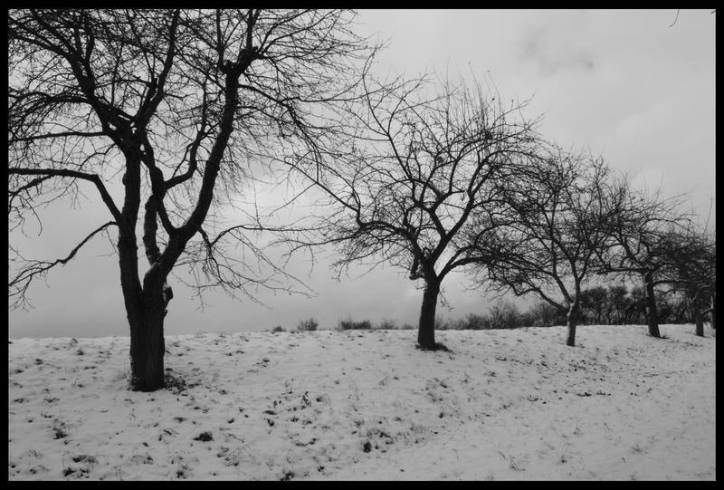 Winter's coming... by Lisa-Schneider