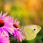 colourful by Lisa-Schneider